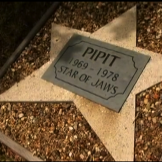 the-grave-of-pipit